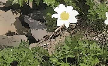 Flora and Fauna of Monte Baldo