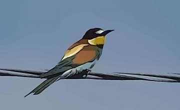 Castellaro Lagusello |  The Nature Reserve and the European Bee-Eater