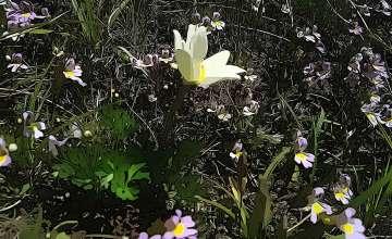 Botanical Garden Monte Baldo